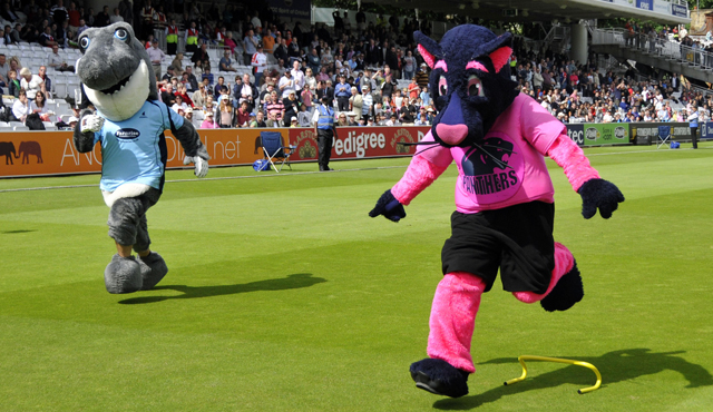 Pinky the Panther taking on Sussex's Sid the Shark