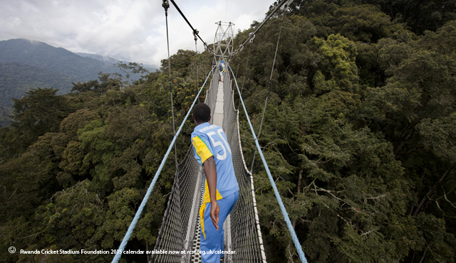 An image from the calendar, sixty metres above the Nyungwe Rainforest